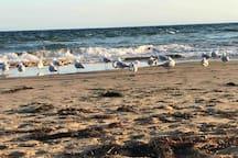 Autumn walks on the beach ❤️