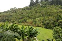 Bosque nativo con camino ecologico