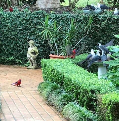 Wild Bird Retreat at Bangalee