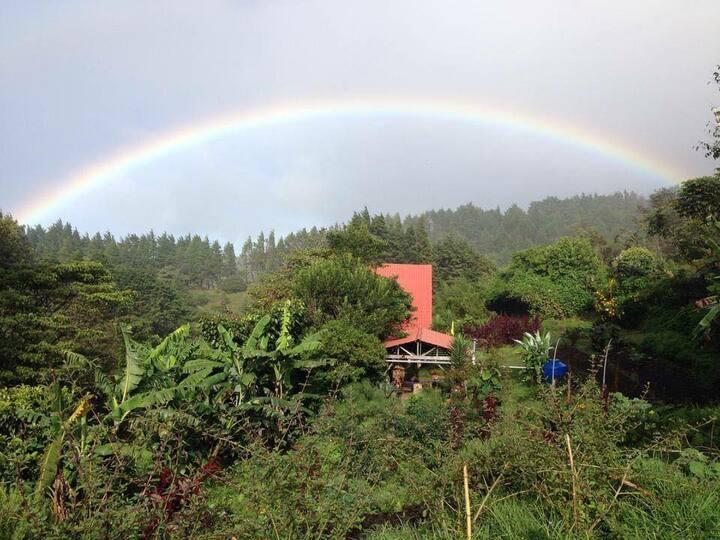 Organic Paradise -Finca Amalur