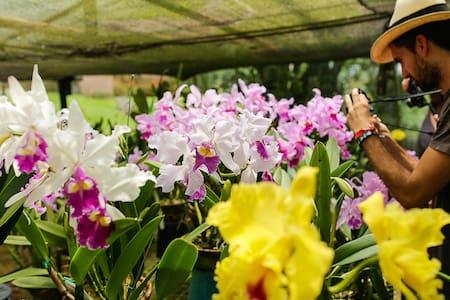 Finca Romelia Orchids & Birds - Manizales