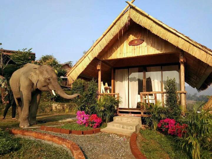 Golden elephant park 清迈大象民宿 Garden House Village