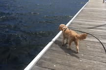 Travelling with a small / medium dog? There are so many beautiful places to take your pets to here in Lake Macquarie and we have a fantastic dog sitter just around the corner so you can have you pet close by when you stay with us (as we do not allow pets on our property).