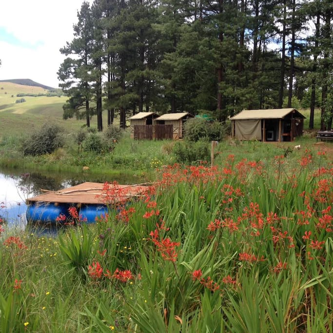 Hiking, bird watching, horse riding, trips up the mountain to the highest pub in the Southern Drakensberg Mountains