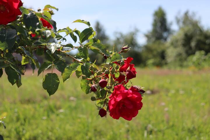 Māliņi - mājas ar mieru un plašu dārzu