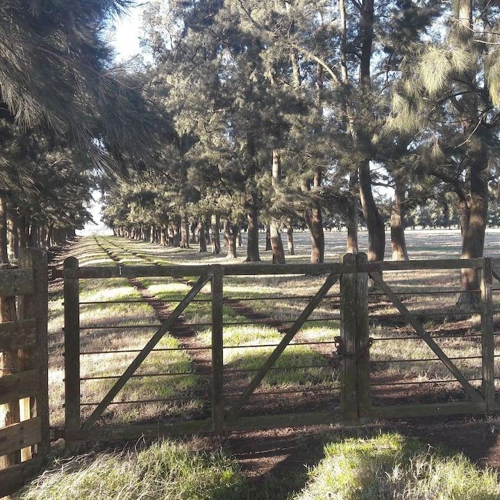 Casa rural en extenso campo.