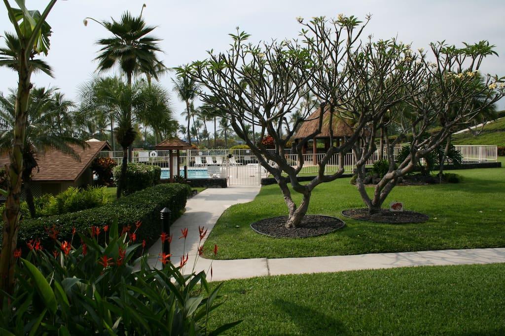 Palm Tree,Tree,Building,Fir,Boardwalk