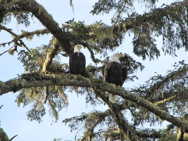 Watch The Eagles Soar From Here - Ucluelet - House