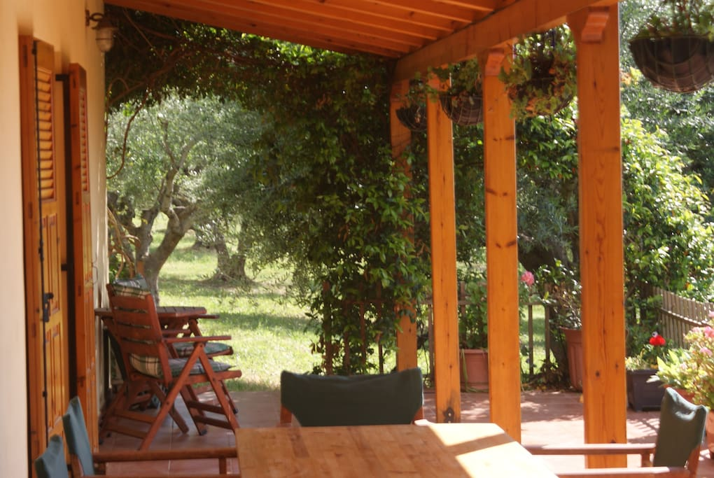 A corner of the veranda, and some of our olive trees.