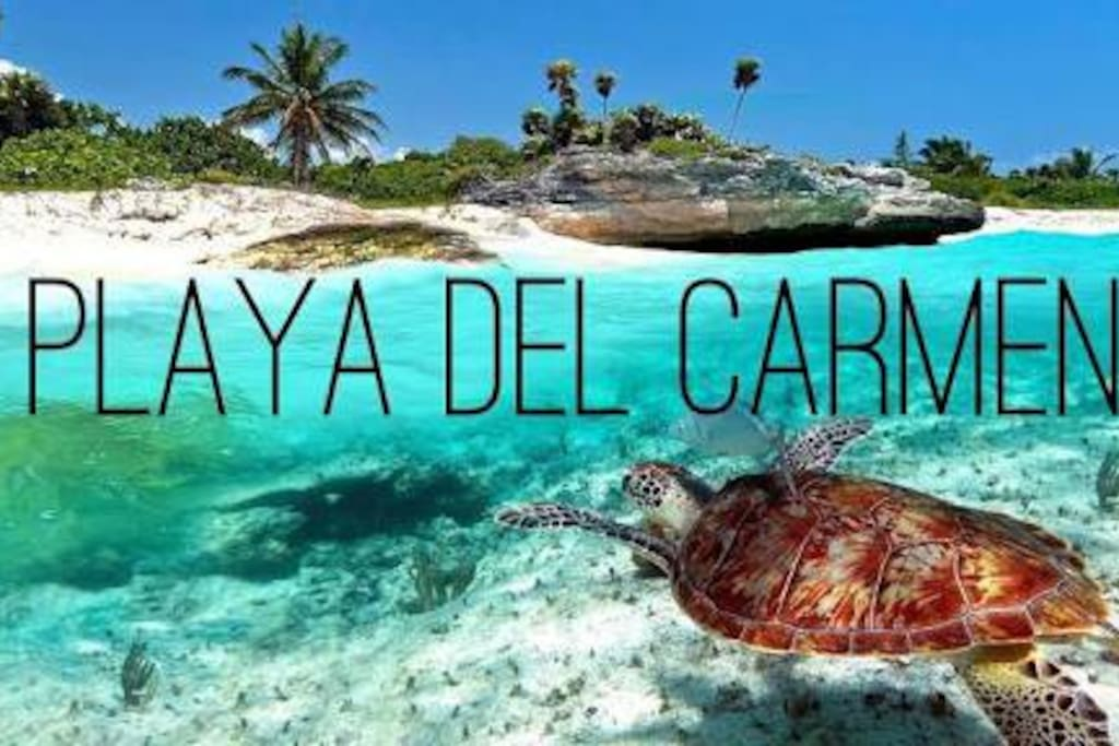 Playa del Carmen is an amazing place, full of wonderful people! Playa del Carmen es un lugar increìble, lleno de personas maravillosas!