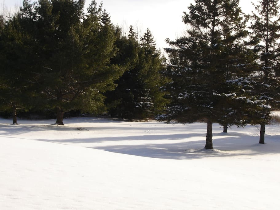 Winter view of front lawn