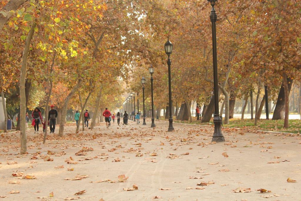 Parque Forestal en otoño.
