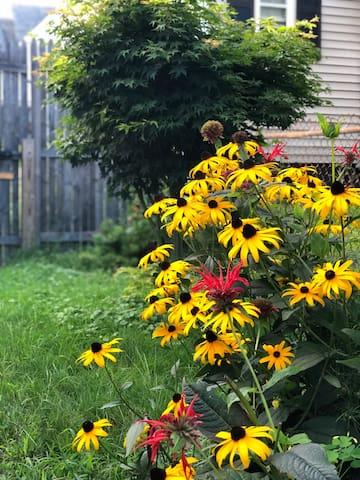 Perennial garden.