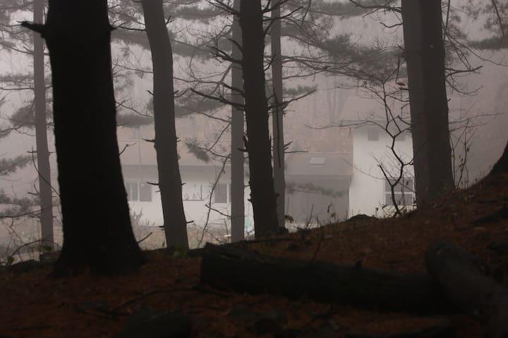 숲속의 오두막.....음악과coffee,황홀한 고립 #1 /Cabin in the wood