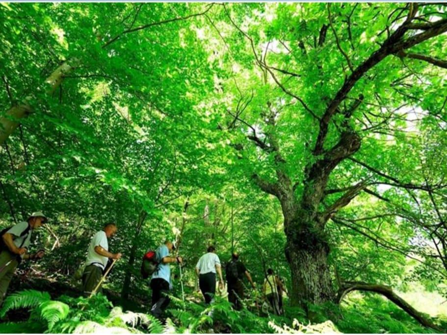 la nature au travers de St Etienne Lardeyrol