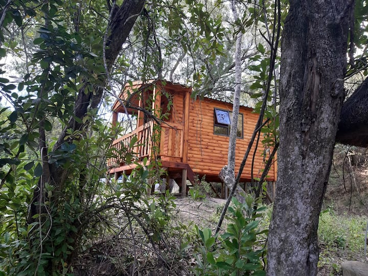 Ferndale Forest Camping Cabin
