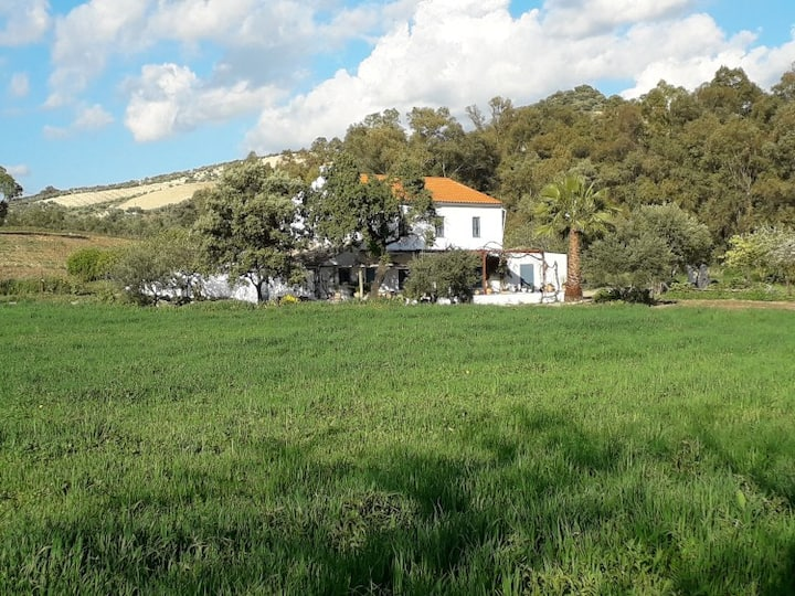 Rural Holiday home with pool near Olvera, Ronda