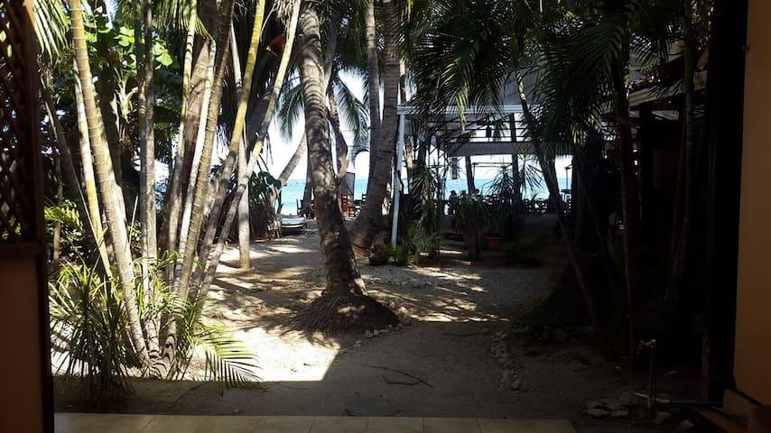 Hotel La Palapa on the beach #2