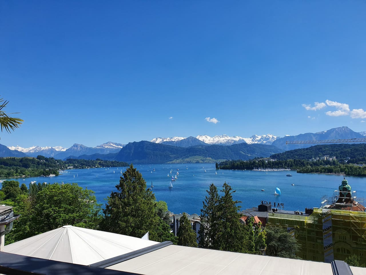 this is lucerne!  p.s. it's not the view out of my window!