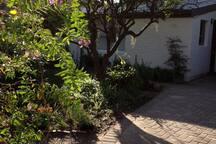 The lovely garden surrounding the flat