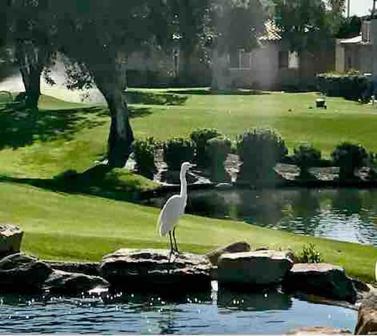 Desert Oasis at  Palm Royale Country Club. $67.00
