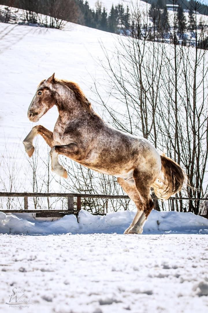 Urlaub am Pferdehof