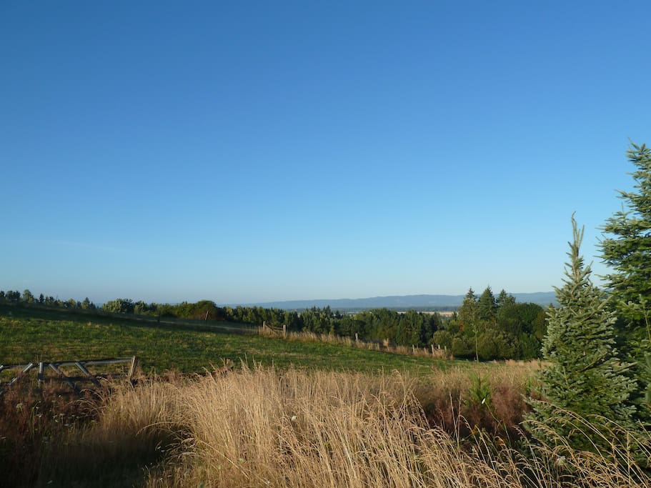 View at our farm. Overlook of Columbia River Valley and Ridgefield National Wildlife Refuge. Lots of birds, deer, rabbits......