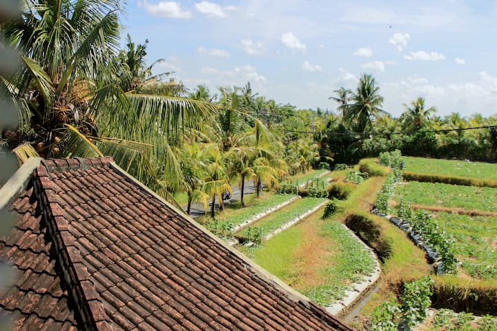 Ancut Sari Guest House among rice fields & AC