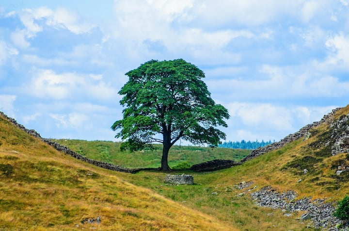 Sycamore Gap and Hadrian's Wall