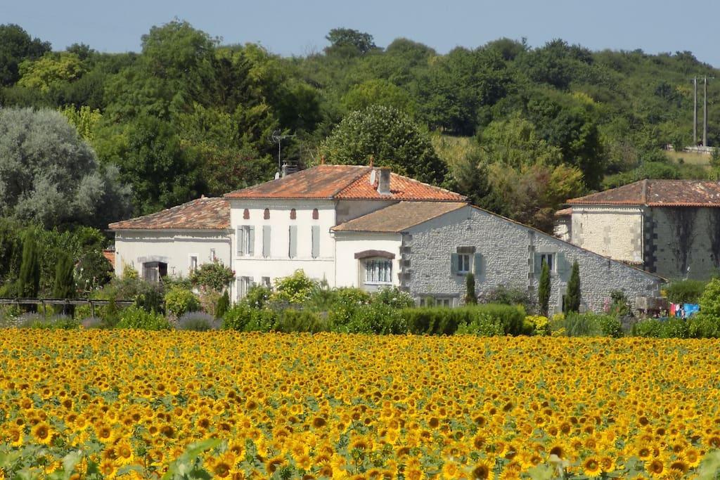 La Grange from the sunflower fields