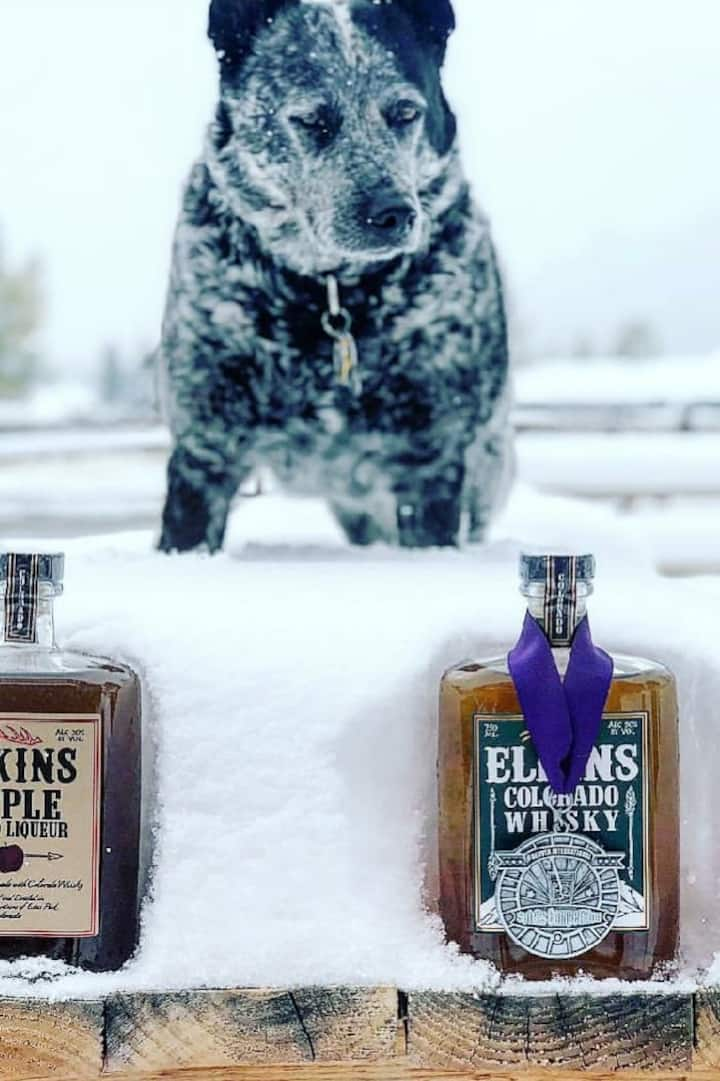 Ollie the distillery dog loves whisky!
