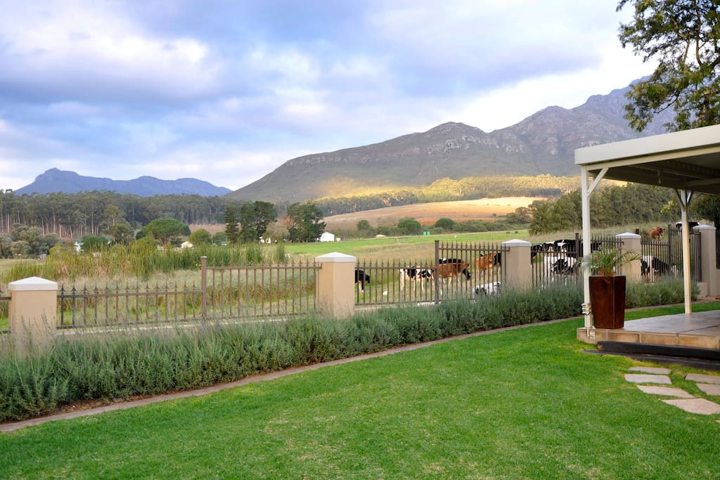 "Our cottage overlooks the working farm & mountains. The cows come and eat the lavender through the fence & say ""Hi""."