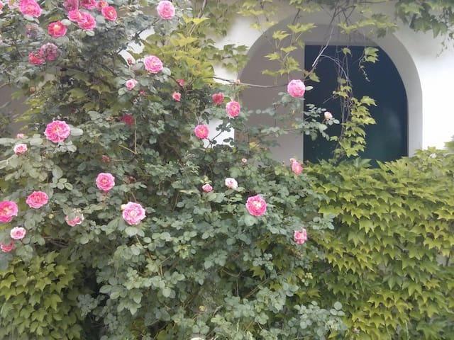 Stanza panoramica e tranquilla - Tuoro - Villa