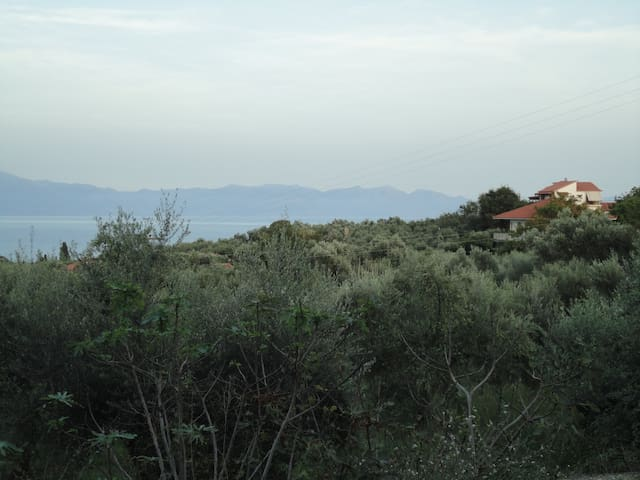 Sweeping panoramic view of sea and the famous Kalamata / Koroneiki olive trees