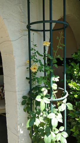 Climbing yellow roses by the front door