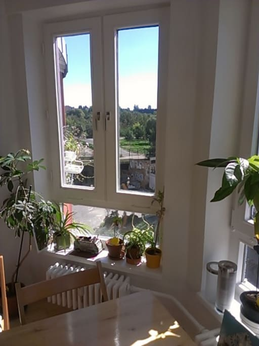 view from the kitchen (direction Mauerpark)