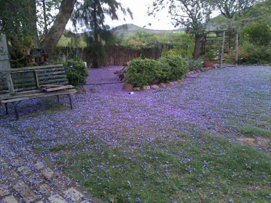 Back garden for use