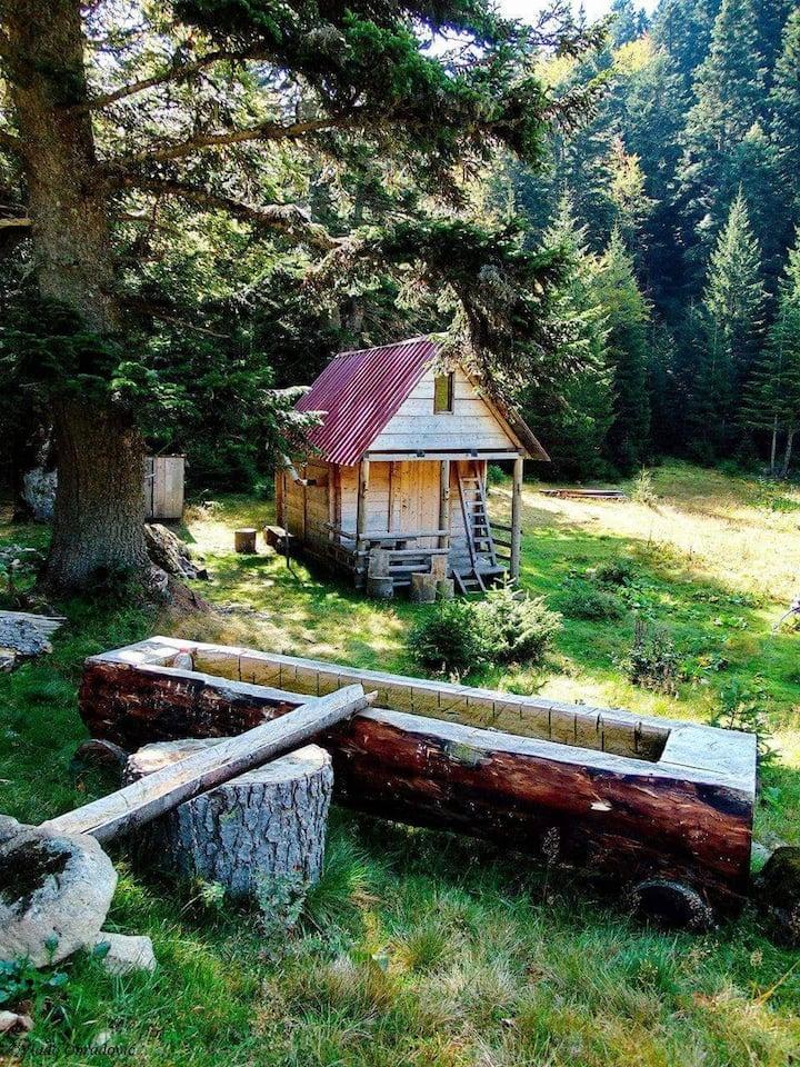 Located inside Biogradska Gora National Park.