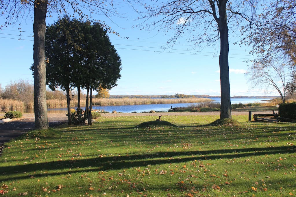 Large front yard lakefront with dock access