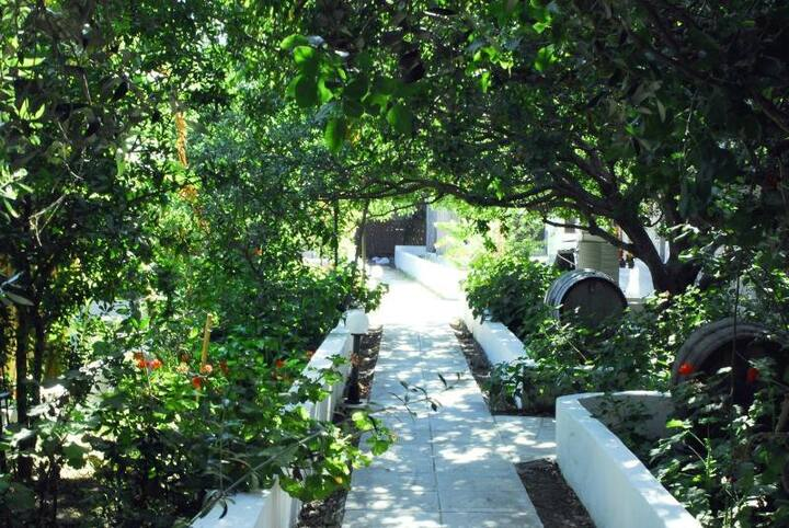 Milos Garden: The Studio