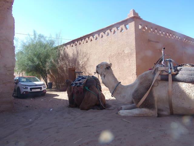 traditional KASBAH (local desert activités )