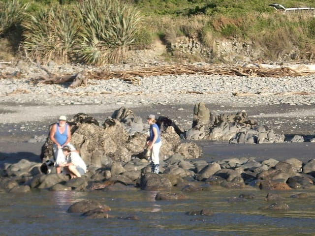 Mussel gathering on our beach