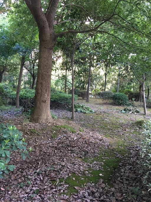 屋后的树林