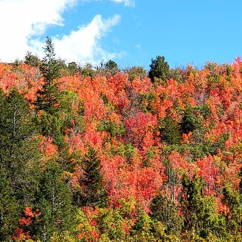 The colors of fall on the hill behind the Farmhouse.