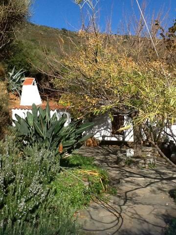 Yard/garden December 2013