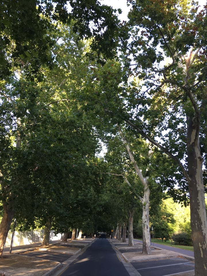 ...along leafy avenues...