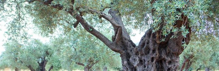 Arabic olive tiny house