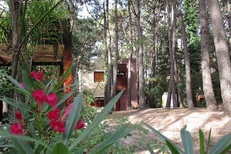 Magnifica residencia en el bosque