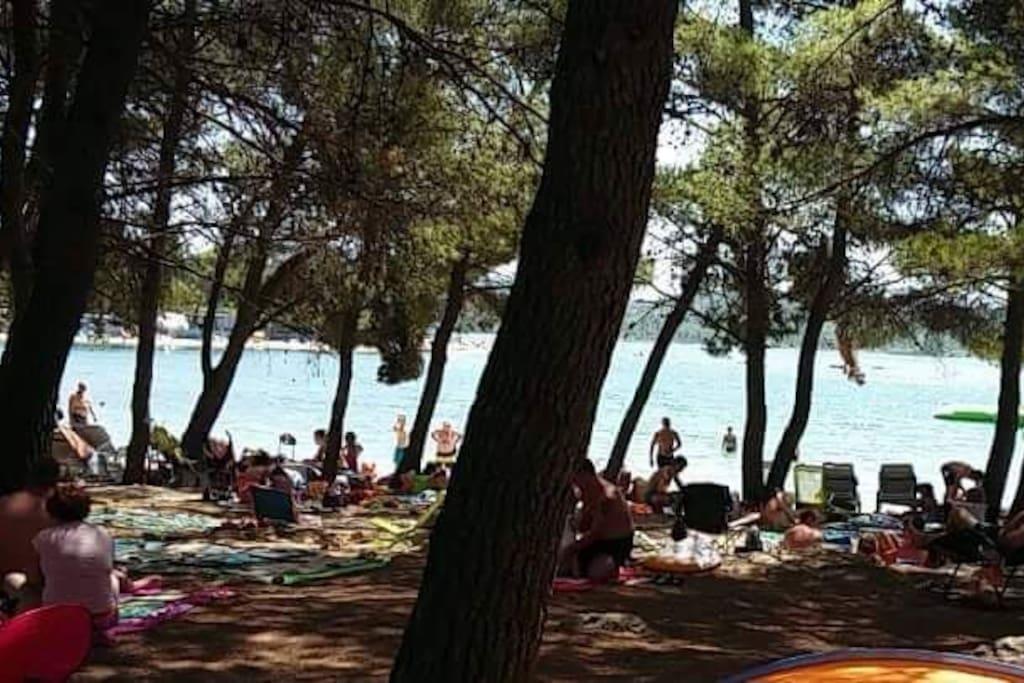 beach Lolic