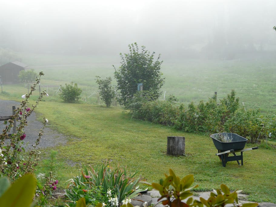garden and grounds on a foggy morning